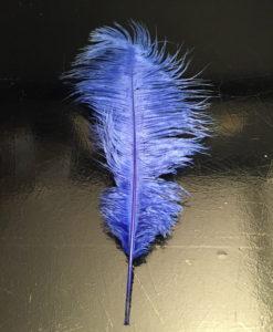 Struisvogelveer blauw