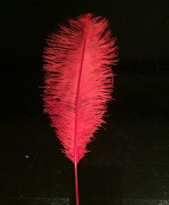 struisvogelveer rood