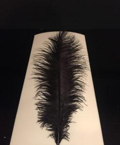 struisvogelveer zwart