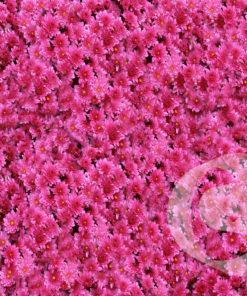 foam-bloemen